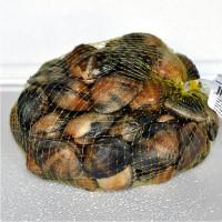 Almeja Japonica