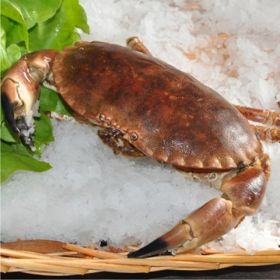 buey de mar gallego